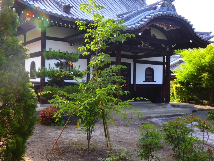 6京都・光照院植樹苗木